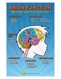 Brain Function Poster for Concussion Prevention
