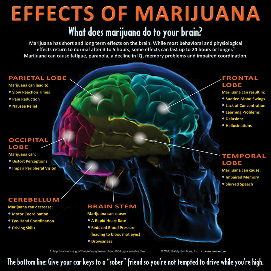 effects of marijuana on the brain essay Essay on marijuana short and long term effects on the brain 2051 words | 9 pages marijuana's short and long term effects on the brain millions are abusing marijuana every day in fact, 1 out of 7 high school students smoke marijuana more than once a day marijuana is taken very lightly and is the most highly used.